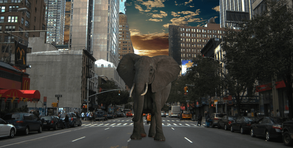 elefant_amir